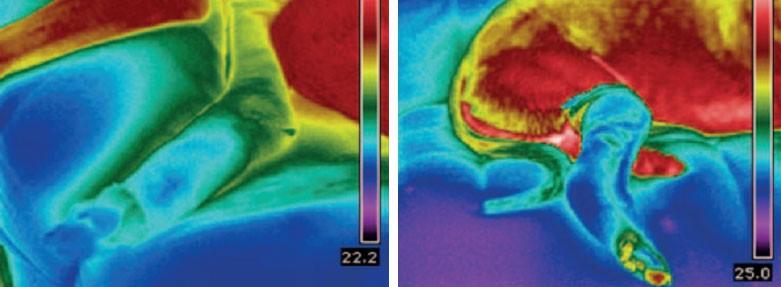 Применение тепловизоров в медицинской и ветеринарной сфере